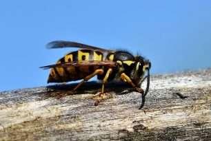 Wie Sie Ungeziefer wie Ameisen und Wespen in den Griff bekommen
